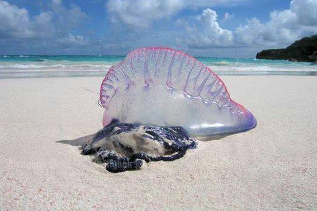 jelly fish.jpg